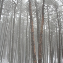 Black pine forest (Cazorla, Spain)
